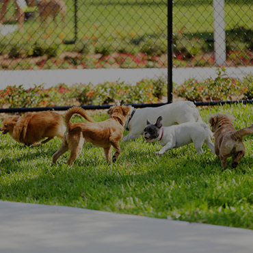 Large Dog Park at Calla Homes Apartments